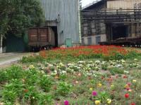 A carpet-like flower lawn at the foot of the Plate Rolling Mill